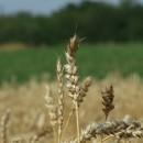 Jak sobie poradzić będąc początkującym rolnikiem?